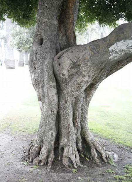 Comment les arbres se reproduisent