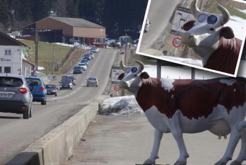 Radar - Vache