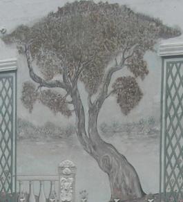 Où a poussé cet arbre maisonnais ?