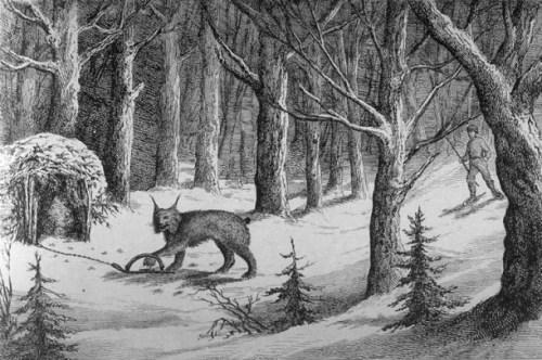 « Manière de prendre le loup-cervier au Labrador », gravure tirée de L'opinion publique, Vol. 2, no. 20, pp. 241 (18 mai 1871) Source: Wikipédia